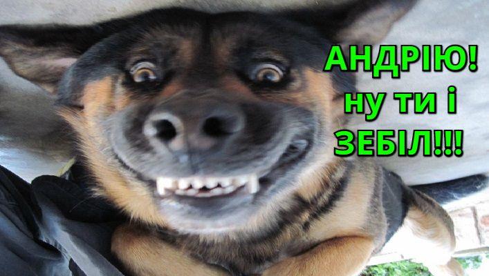 Собака Андрія Пальчевського сховалася від зараженого на COVID-19 власника у приюті