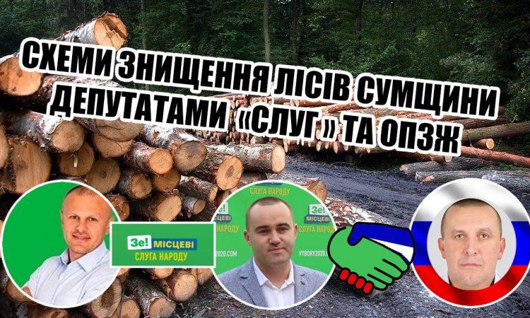 Депутати «Слуги народу» і «ОПЗЖ» об'єдналися та заробляють крадіжкою лісу на Шосткинщіні